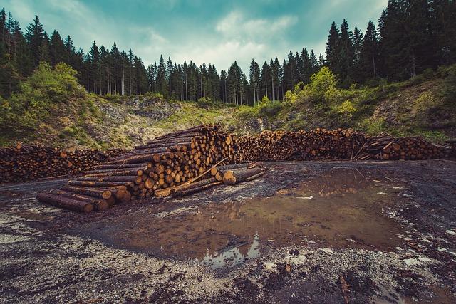 kopa dřeva